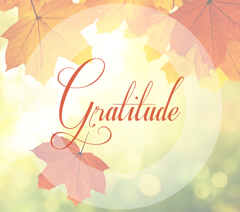Gratitude Palmer