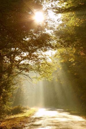 Light on path